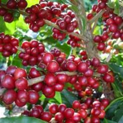 Indonesia_Takengon_Gayo_1