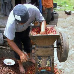 Indonesia_Takengon_Gayo_6
